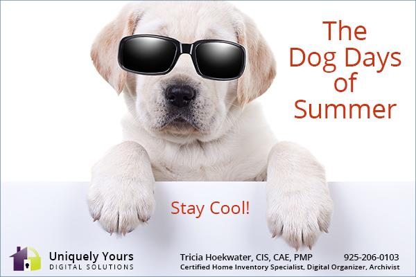 White Labrador Puppy Wearing Sunglasses